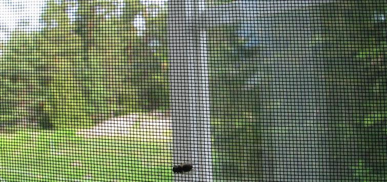 Plasa insecte